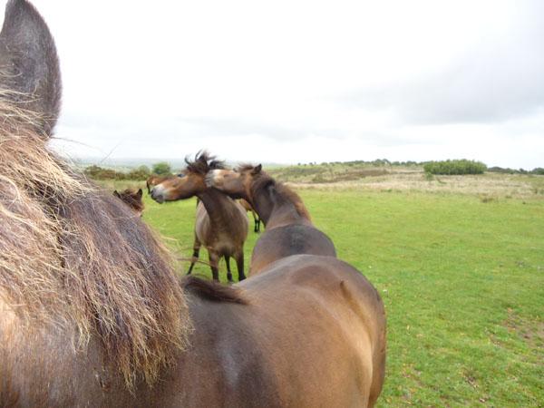 Exmoor encounter
