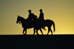 www2-horses-1