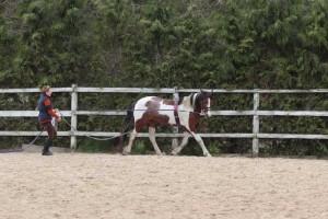 wwwPhoenix long reining 3