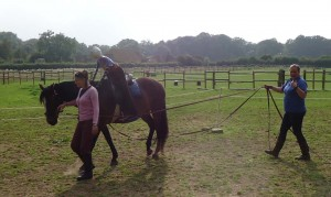 Dolly being helped on long reins
