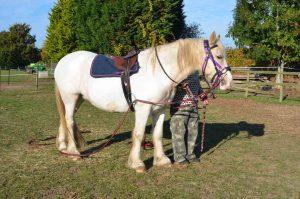 wwwlemony-with-saddle